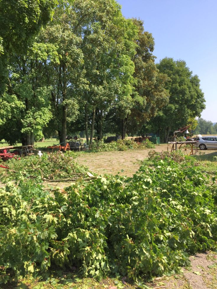 Hagelsturm Rheinau 2017 Baumschäden